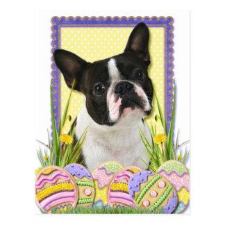Osterei-Plätzchen - Boston Terrier Postkarte