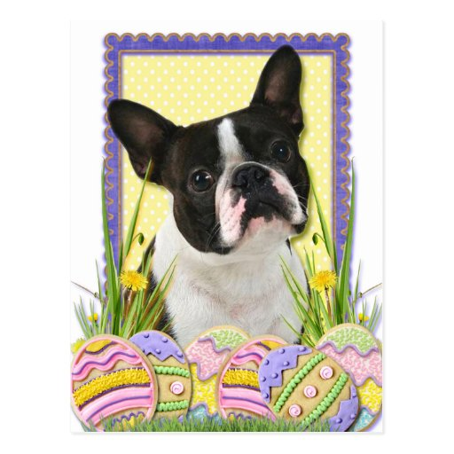 Osterei-Plätzchen - Boston Terrier Postkarten