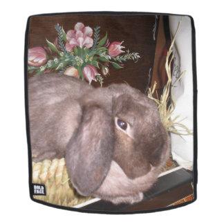 Osterhase in einem Korb Rucksack
