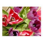Ostern-Tulpen kundengerecht Postkarten