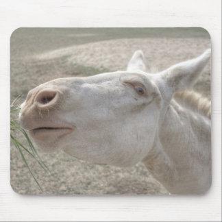 Österreichisch-Ungarischer weißer Esel Mousepad