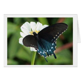 OstFrack-Schmetterling auf weißem Zinnia Karte