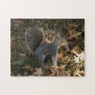 Ostgrau-Eichhörnchen, Foto-Puzzlespiel Puzzle