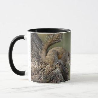 Ostgrau-Eichhörnchen oder graues Eichhörnchen Tasse