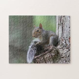 Ostgrau-Eichhörnchen Puzzle