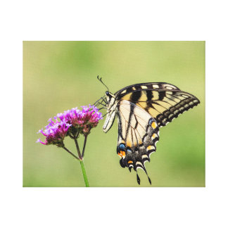 Osttiger-Frack-Schmetterling Leinwanddruck