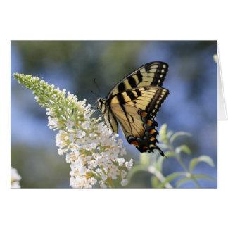 Osttiger-Frack-Schmetterling Notecard Karte