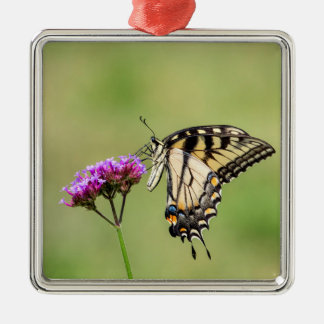 Osttiger-Frack-Schmetterling Silbernes Ornament