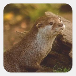 Otter Quadratischer Aufkleber