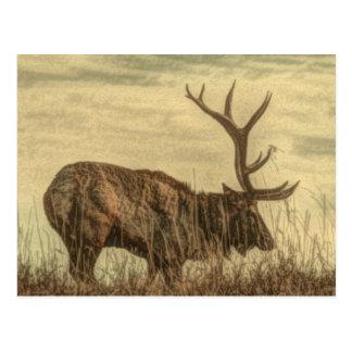 Outdoorsmanwildniswild lebende tiere rustikale postkarte