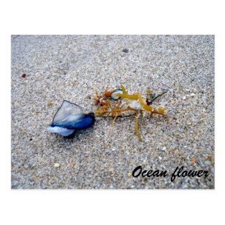Ozean-Blume Postkarte