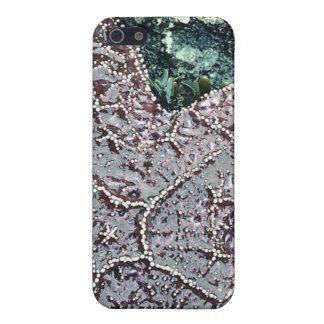 OZEAN-STERN iPHONE Schutzhülle Fürs iPhone 5