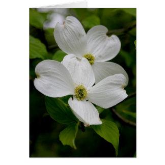 PA-Wildblumen - Hartriegel Notecard Karte