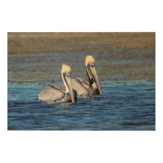 Paare 36x24 Pelikane Holzleinwand