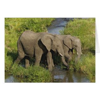 Paare der afrikanischen fütternden Elefanten, Karte