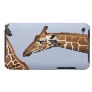 Paare der retikulierten Giraffen (Giraffa) Case-Mate iPod Touch Hülle