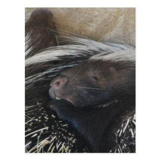 Paare der Stachelschwein-Postkarte Postkarte