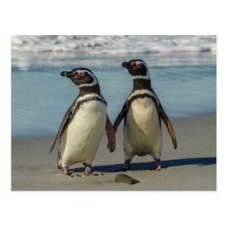 Paare Pinguine auf dem Strand Postkarte