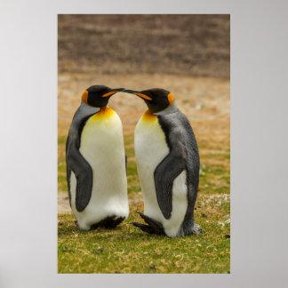 Paare von König Pinguine, Falkland Poster
