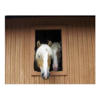 Palamino Pferde in einer Scheune in Colorado Postkarte