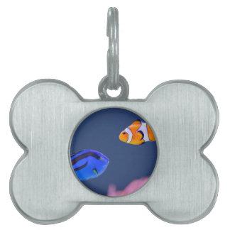 Palettensurgeonfish- und -clownfischschwimmen tiermarke