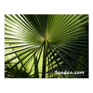 Palmblatt Postkarte