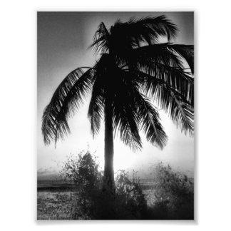 Palme in einem Sturm Kunstfoto