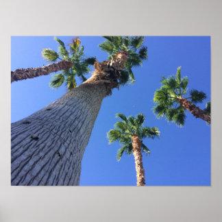 Palme-Plakat von Palm Spring Poster