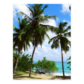 Palmen auf tropischer Meerblick-Postkarte Postkarte