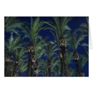 Palmen im Abendslicht Karte