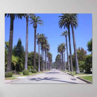 Palmen in Los Angeles Poster