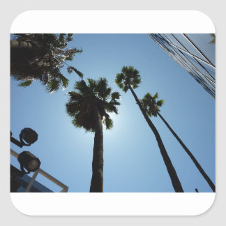 Palmen Los Angeles Hollywood USA Quadratischer Aufkleber