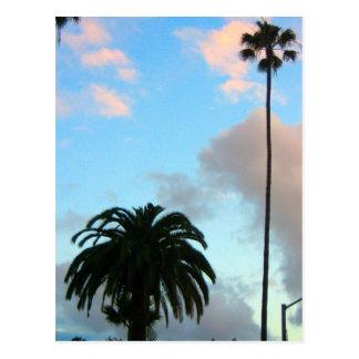 Palmen Postkarte