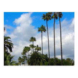 Palmen u. Wolken-Postkarten Postkarte