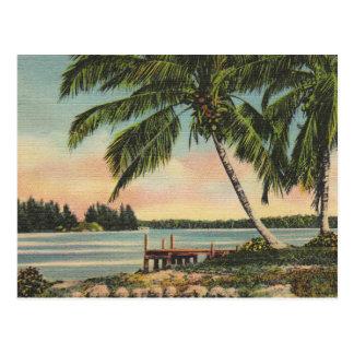 Palmen Vintag Postkarte