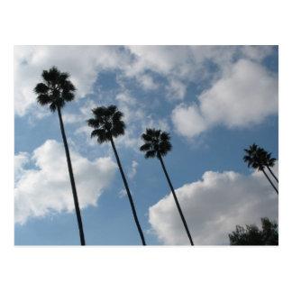 Palmentres und -wolken postkarte