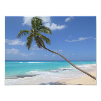 Palmestrand Karibisches Meer Fotodruck