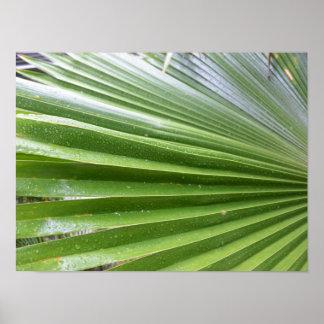 Palmwedel nach einer Dusche des Regens Poster