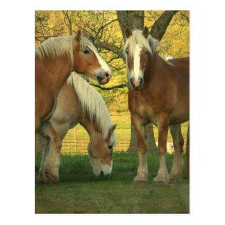Palomino-Entwurfs-Pferdepostkarte Postkarte