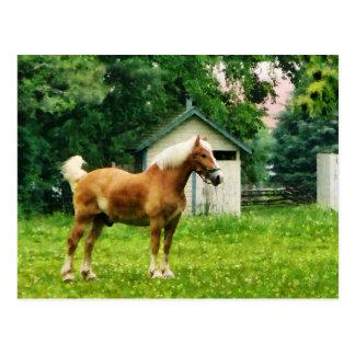 Palomino in der Weide Postkarte