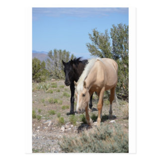 Palomino-Mustang Postkarte