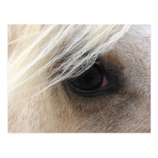 Palomino-Pferdeauge Postkarte