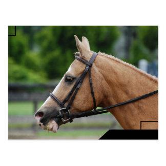 Palomino-Pferdepostkarte Postkarte