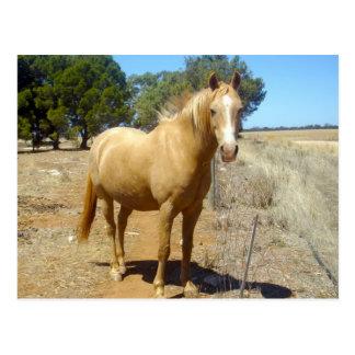 Palomino-Pferdeschönheit, Postkarte