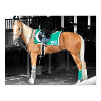 Palomino-Pony bei Belmont Park Postkarte