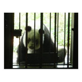 Panda-Bär hinter Gittern Postkarte