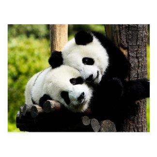Panda-Bären Postkarten