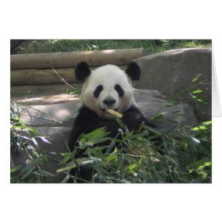 Panda-Bärn-leere Karte