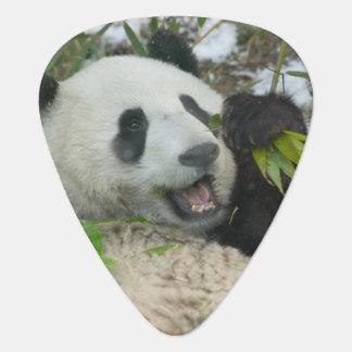 Panda, der Bambus auf Schnee, Wolong isst, Plektrum