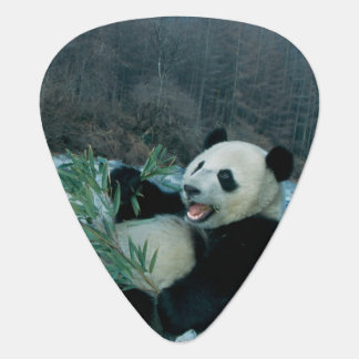Panda, der Bambus durch Flussufer, Wolong, 2 isst Plektron